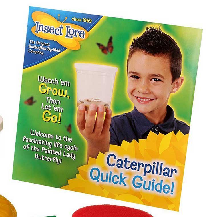 Insect Lore Caterpillar to Butterfly Kit