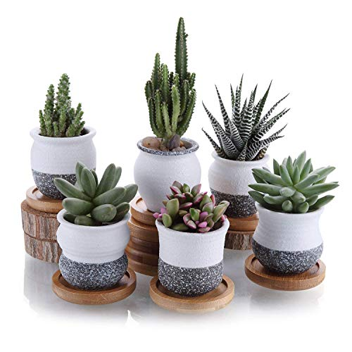 Ceramic Succulent Planter Pots with Bamboo Saucers