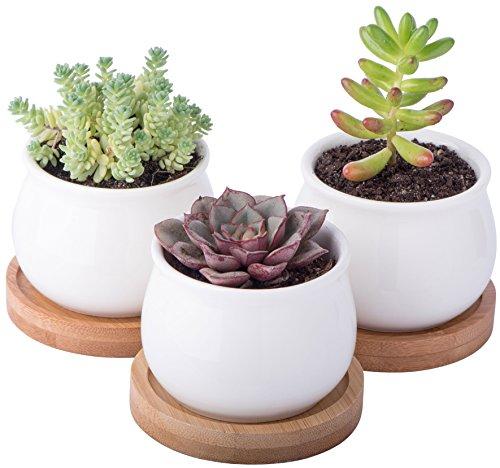 A Set of Mini Planters