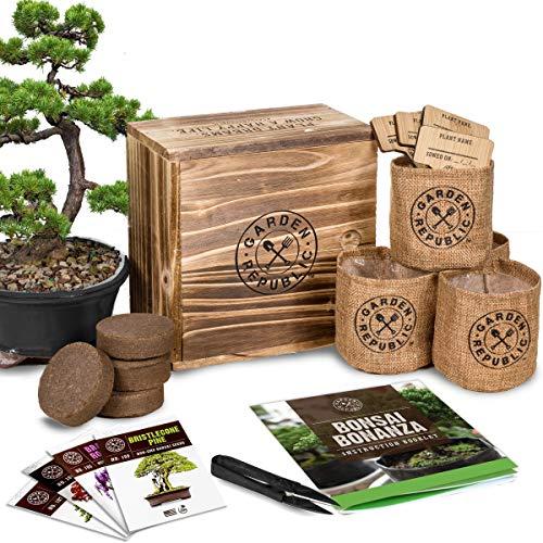 Bonsai Tree Starter Kit
