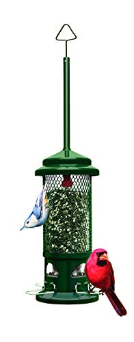 Squirrel Buster Squirrel-Proof Bird Feeder