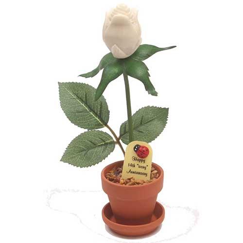 Ivory Desk Rose