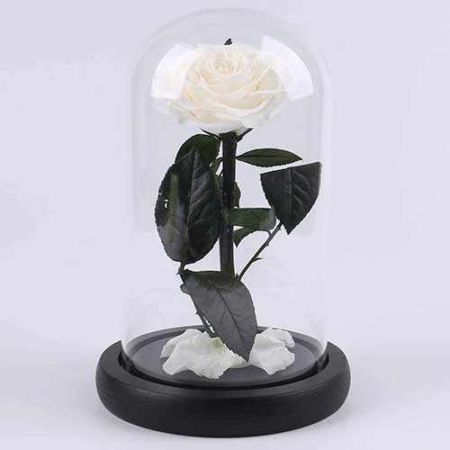 Preserved White Rose